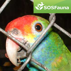 SOS Fauna and the Illegal Wildlife Trade in Brazil: An Interview with Juliana Ferreira