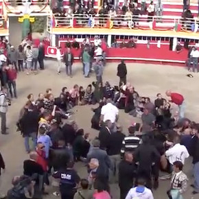 Fighting the Bullfight in France with Civil Disobedience: An Interview with JoëlleVerdier
