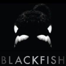 blackfish_290x290