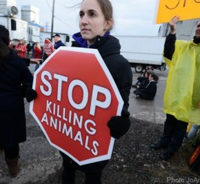 Working Towards a World Without Slaughterhouses: Activists Discuss Non-Violent Civil Disobedience Campaign at St. Helen's Meat Packers