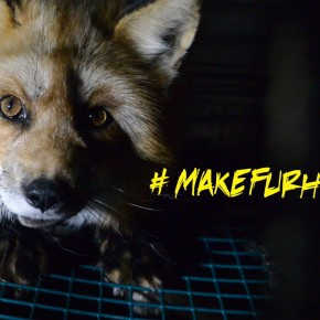Let's Make Fur History