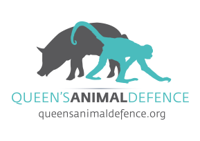 Failing Grade in Transparency: Queen's Animal Defence Audits University Animal Testing Practices